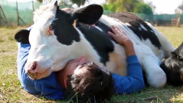 szeretet állat