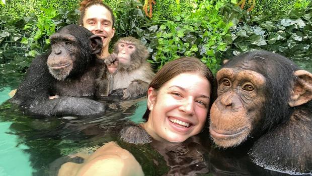 majom fürdik úszik csimpánz