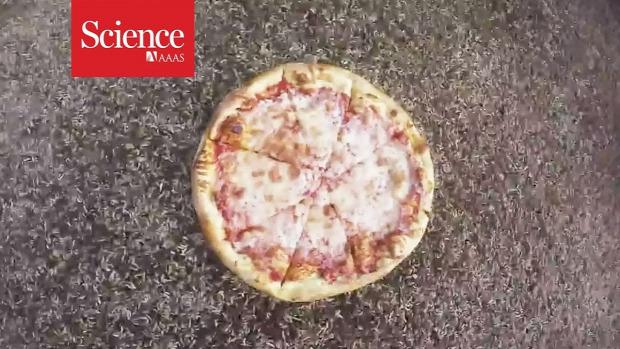 pizza kukac lisztkukac