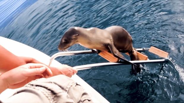 oroszlánfóka hajó létra fedélzet
