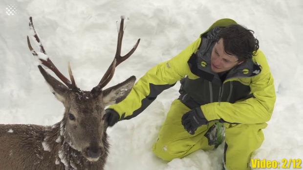 állat mentés