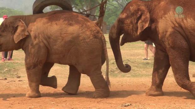 elefánt bébi játék borjó anya evés