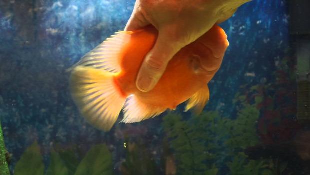 hal akvárium simogatás játszik