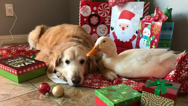 kutya kacsa karácsony
