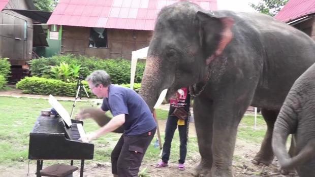 állat zene tehén marha ló elefánt