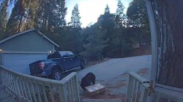 medve kutyatáp futár lopás
