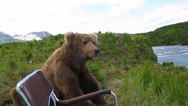 Alaszka medve folyó