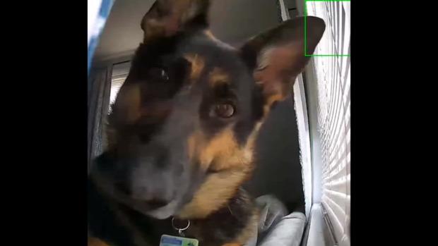 kamera biztonsági mozgásérzékelő kutya