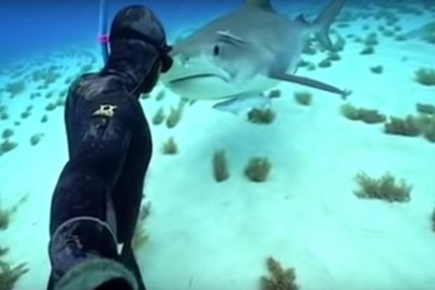 cápa eszkimó puszi