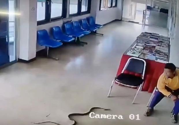 rendőrség őrs iroda kigyó Thaiföld