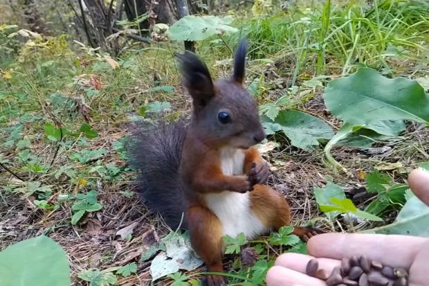 mókus lefagy mozdulatlan mag