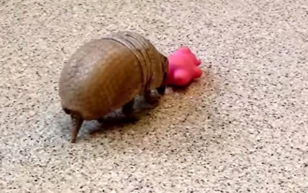 armadillo játék játszik