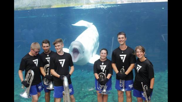 beluga delfin koncert fúvós
