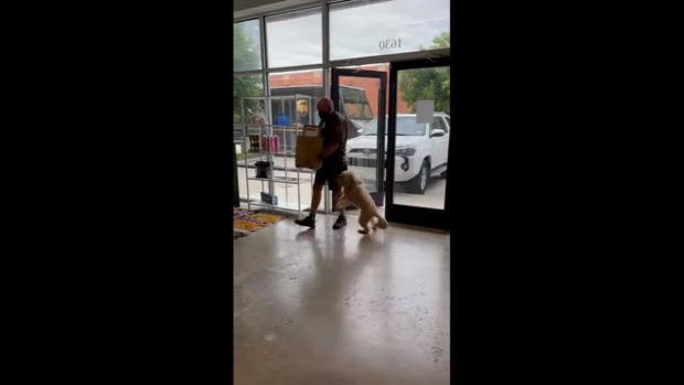 kutya futár  boldog