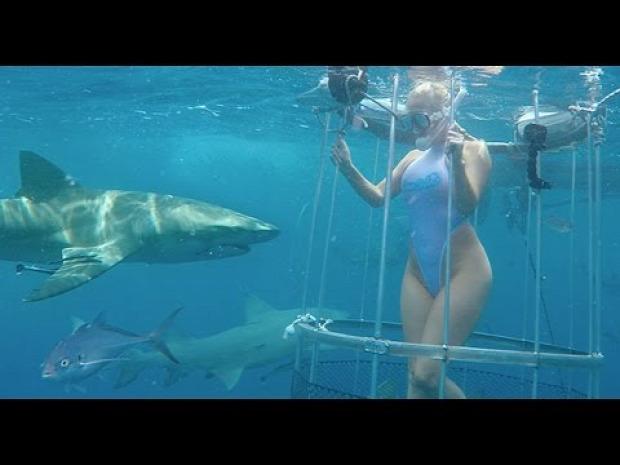 cápa támadás ketrec