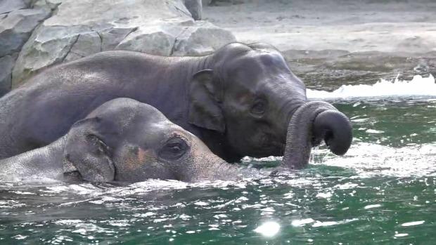 elefánt fürdés Samudra