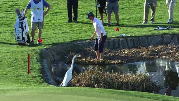 golf ütés víz