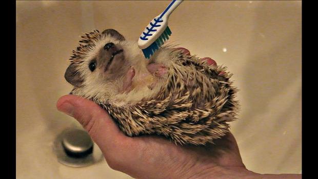 sün mosdás fürdetés