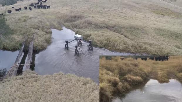 drón robot pásztor Ausztrália