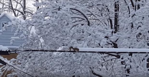 mókus hó takarítás
