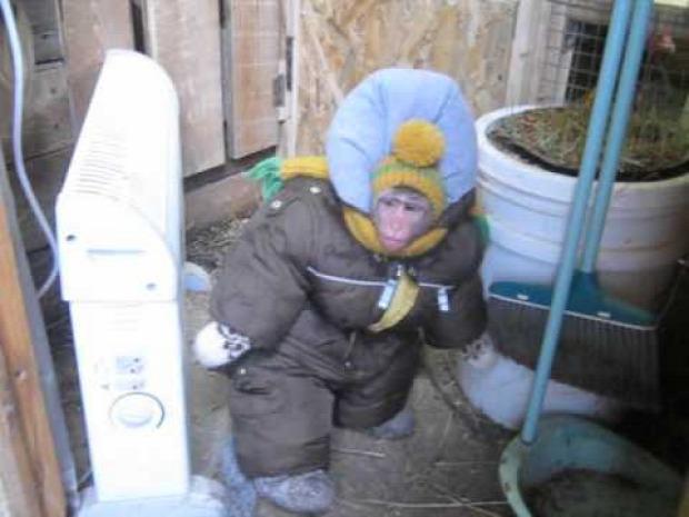 majom hideg gyerekruha