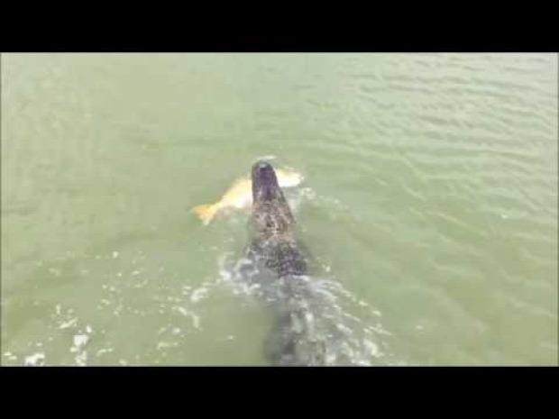 fiú horgászik kapás aligátor krokodil