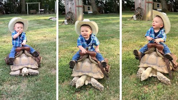 teknős lovaglás baba cowboy