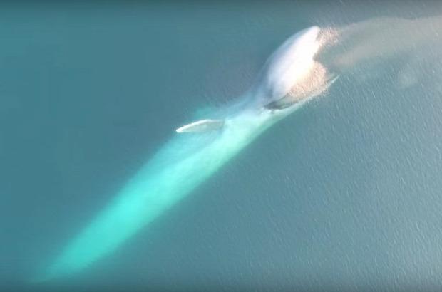 kék bálna drón krill evés
