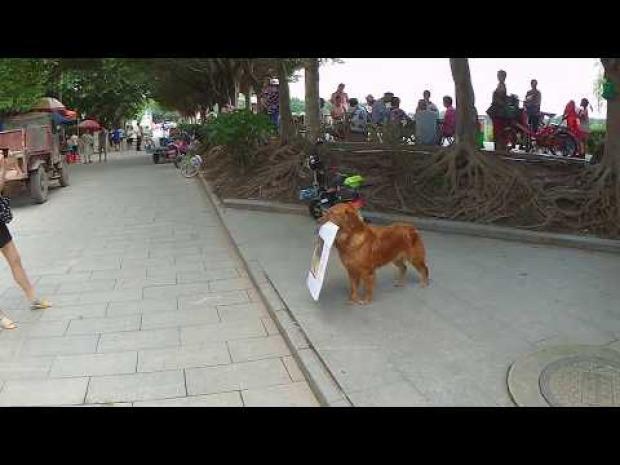 kutya tábla hirdetés