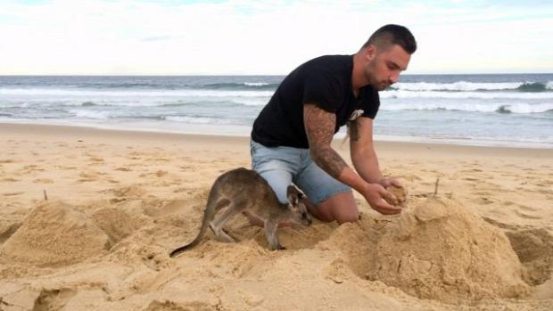 barát kenguru
