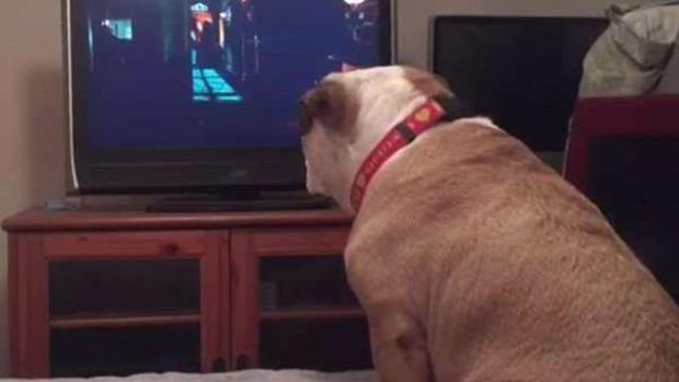 bulldog film kislány véd horror