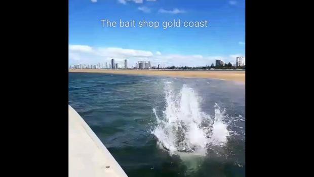 kutya futtatás tenger homok