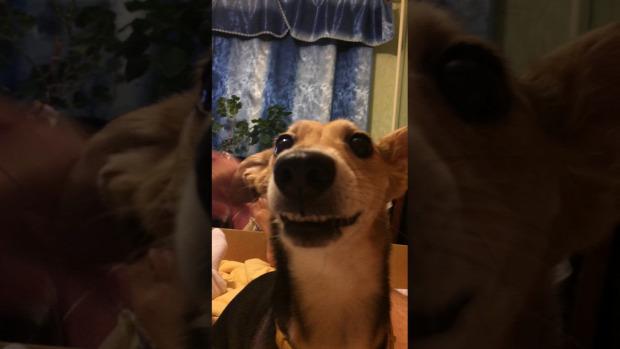 kutya énekel