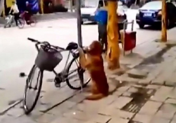 kutya bicikli