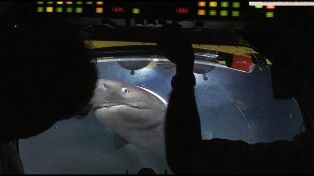 bálna tetem tengeralattjáró cápa támadás
