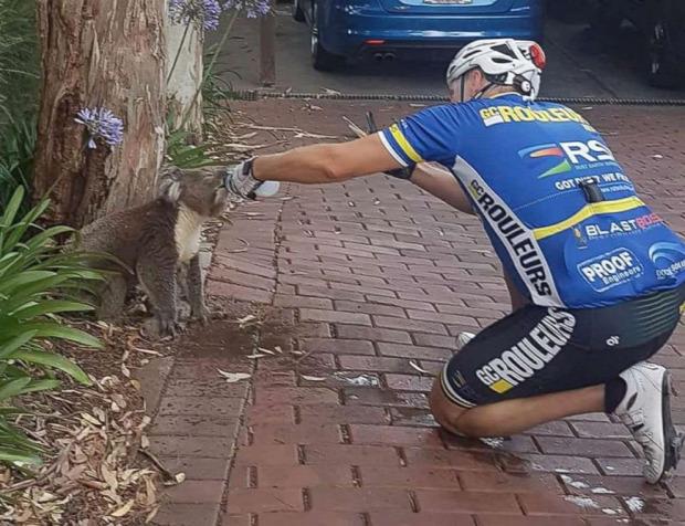 Ausztrália koala bringás kerékpáros meleg kánukula szárazság szomjas